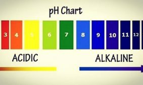 PH balance of your body