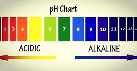 PH balance of your body