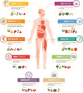 cleanses the body of toxins